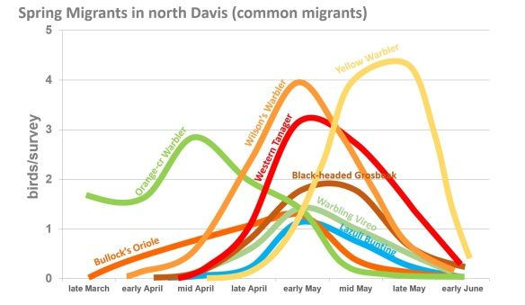 DavisMigrants1spring